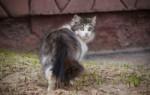 К чему кот или кошка уходит из дома – народные приметы, значение, возможные объяснения