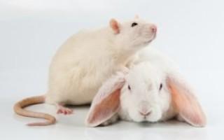 Кролика девушка давит Живодерка Давит