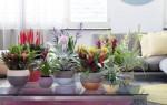 Фэн-шуй комнатных растений – значение и особенности использования домашних цветов