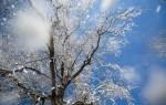 Народные приметы, определяющие погоду. Как наши предки обходились без синоптиков