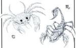Гороскоп совместимости знаков зодиака скорпион и рак – что ожидать от отношений в таком союзе