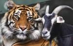 Гороскоп совместимости знаков Тигр и Коза по восточному календарю – что ожидать от отношений в таком союзе