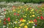 Растения и травы обереги для защиты дома и семьи от сглаза, порчи и злых людей