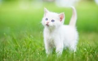 Что означает, если котенок, кот или кошка прибилась к дому – народные приметы, значение, возможные объяснения