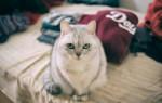 К чему кот или кошка гадит на кровать – народные приметы, значение, возможные объяснения