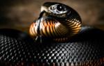 Что означает видеть змею во сне – возможные толкования по соннику