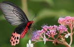 Что означают бабочки в философии Фэн-Шуй