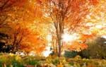 Приметы про осеннюю погоду – значение, примеры, возможные объяснения