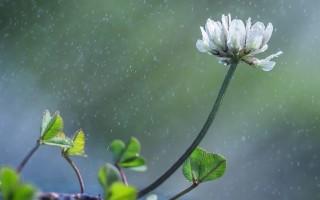 Народные приметы о растениях, связанные с погодой и жизнью – значение, возможные объяснения