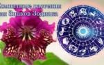 Комнатные растения по гороскопу – какой цветок подходит каждому знаку зодиака