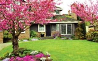 Какие деревья можно сажать возле дома и на участке, а какие нельзя – народные приметы, особенности растений