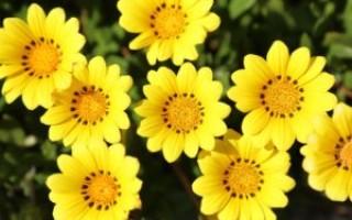 Что означают жёлтые цветы во сне – возможные толкования по соннику