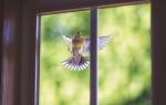 К чему птица бьется в стекло – народные приметы и объяснения