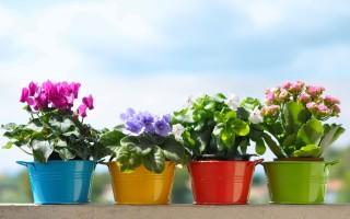 Какие цветы нужно держать дома для благополучия – приметы и суеверия