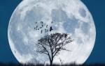 Характеристика и описание лунных дней, значение каждого в разных сферах жизни человека