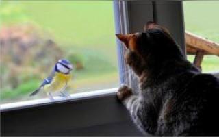 К чему птица стучится в окно – народные приметы и возможные толкования