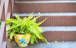 Можно ли держать в доме папоротник – народные приметы и полезные свойства