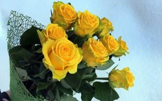 К чему дарят желтые розы – народные приметы, значение, возможные объяснения