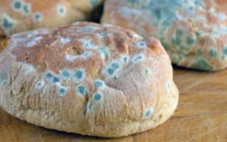 Что означает хлеб с плесенью во сне – возможные толкования по соннику