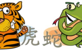 Гороскоп совместимости знаков Тигр и Змея по восточному календарю – что ожидать от отношений в таком союзе