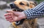 Что означает укус собаки во сне – толкование по соннику