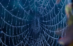 Что означает видеть паутину во сне – возможные толкования по соннику