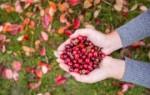 Что означает собирать ягоды во сне — возможные толкования по соннику
