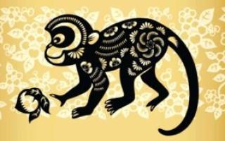 Гороскоп совместимости знаков Обезьяна и Обезьяна по восточному календарю – что ожидать от отношений в таком союзе
