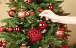Почему наряжают елку на Новый год – особенности традиции, причины выбора именно этого дерева