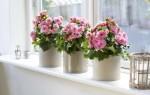 Что означают цветы в доме: приметы и суеверия – какие из них приносят удачу и богаство