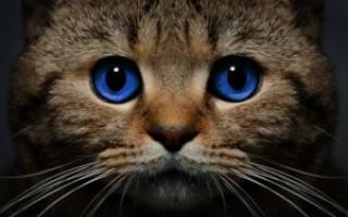 Народные приметы про котов – о чем предупреждают мурлыкающие предсказатели будущего