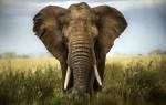 Что означает слон во сне для женщины – возможные толкования по соннику