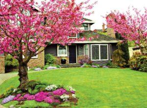 Какие деревья можно сажать возле дома приметы