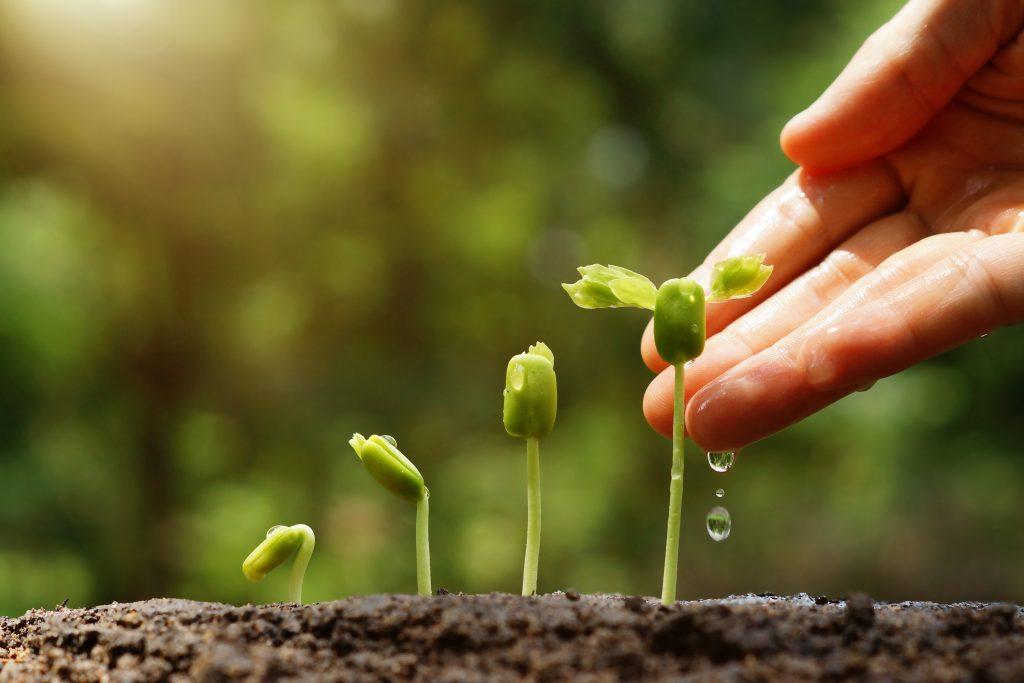 Народные приметы о растениях, связанные с погодой и жизнью