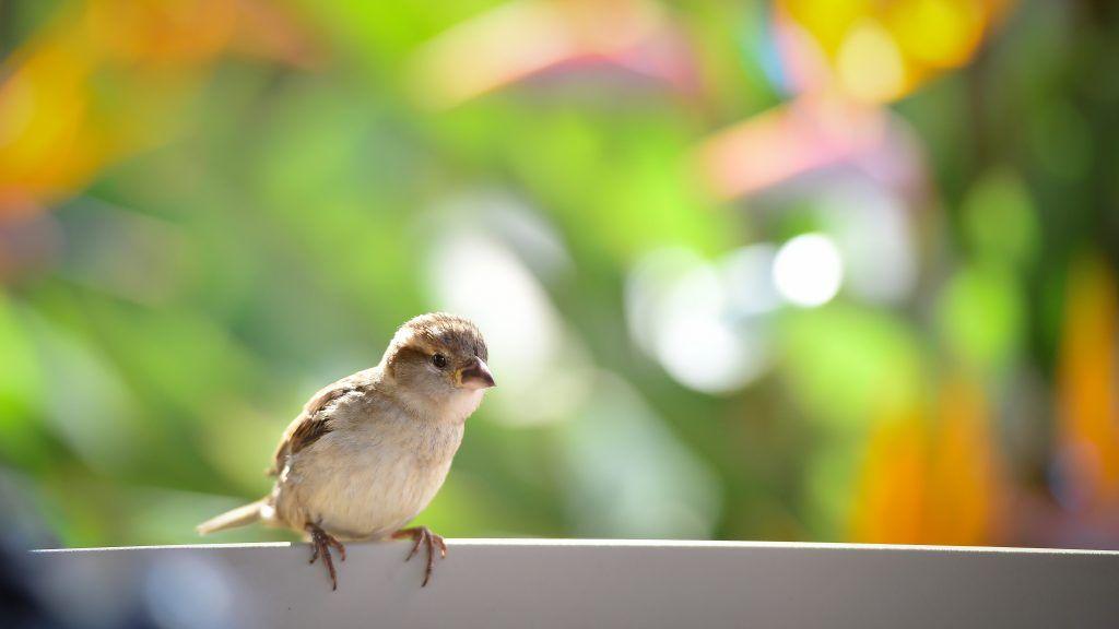 Птичка залетела на балкон к чему это