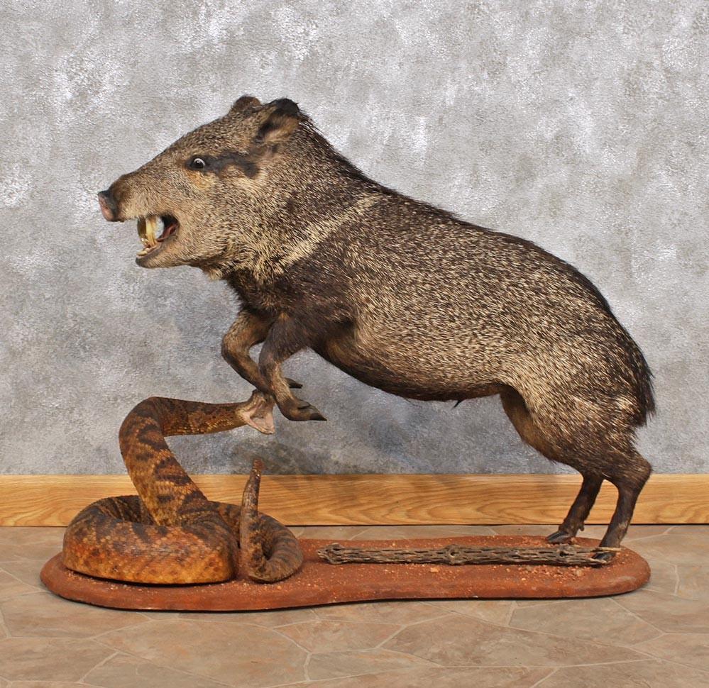 Гороскоп совместимости знаков Змея и Свинья
