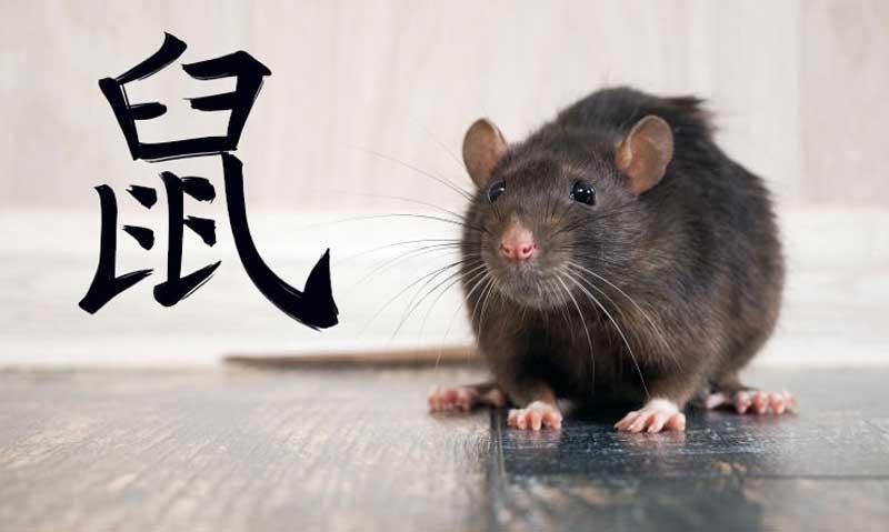 Гороскоп совместимости знаков Крыса и Свинья