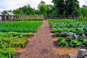 Как защитить огород от сглаза и порчи – инструкция